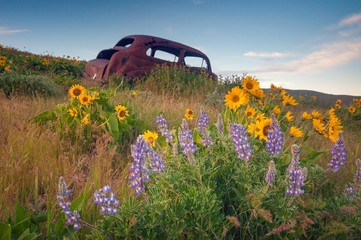 An old abandoned car surrounded by flowers