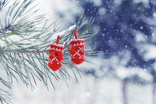 winter still life in cold colors with red mittens hanging on the spruce