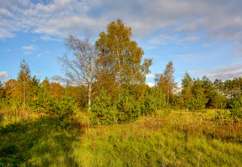 Sunny autumn evening in the country.Shadows from the setting sun.