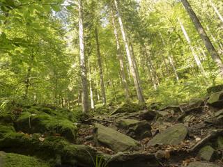 Wandern im Schwarzwald. Steiniger Weg hoch zum Sankenbacher Wasserfall.