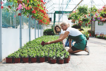 Two florists working in greenhouse