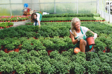 Taking care of plants in greenhouse