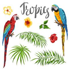 Set of tropical plants and parrots.