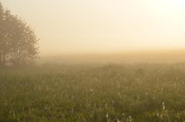 landscape, sky, field, fog, nature, sunset, grass, sunrise, meadow,