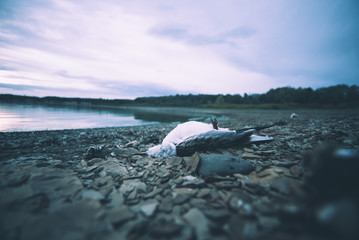 Dead bird on shore.