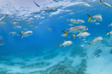 Fish swim in school in mexico