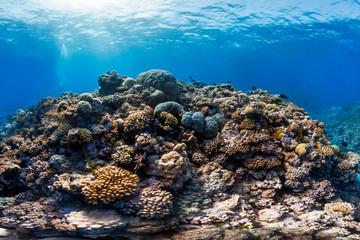 Ribbon reef 5 in australia