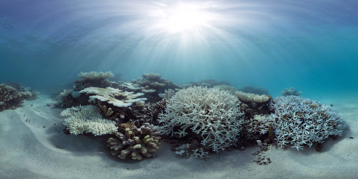 Bleaching coral in the Maldives