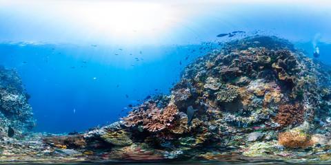 Diver on Raja Ampat reef