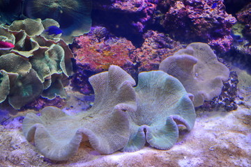 colored corals on white sea sand and tropical fish under water