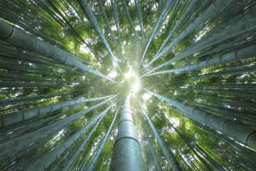 Arashiyama look up