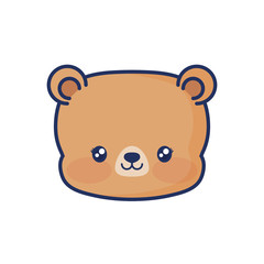 cute bear animal baby