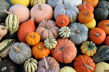 Pumpkins and  squash.