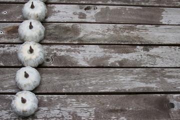 White pumpkins on wooden background