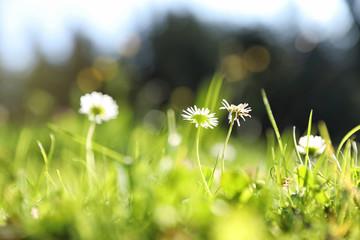 Beautiful flowers growing on green meadow in summer