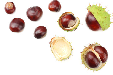 chestnuts isolated on white background. top view