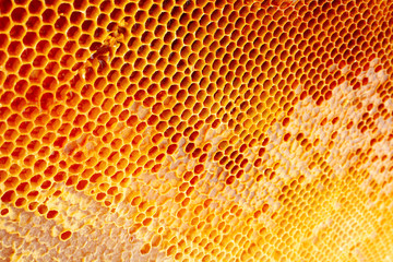 Yellow Honeycomb closeup background