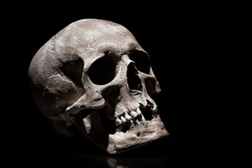 Human skull on black background with reflection close up