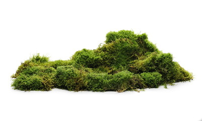 Green moss with grass isolated on white background Fotoväggar