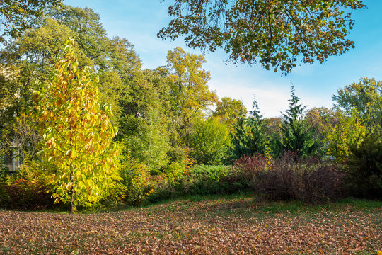 city park lawn covered with foliage. beautiful autumn scenery
