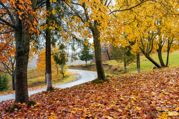 trees in colorful foliage by the road. lovely countryside scenery in autumn
