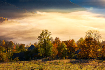 glowing fog in the rural valley. beautiful autumn scenery in mountains. trees in red and yellow foliage