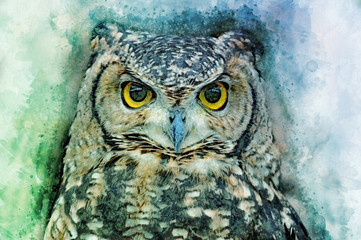 Owl head cluseup - painted with watercolor. Bird illustration.