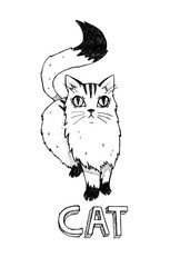Cat on a white background. Handmade, hand drawn vintage illustration.