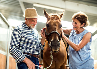 A happy senior couple petting a horse in a stable.