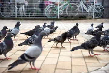 街中の鳩2