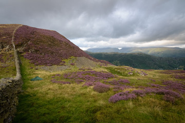 Wild camping in beautiful scenery with purple heather and mountains Lake district England