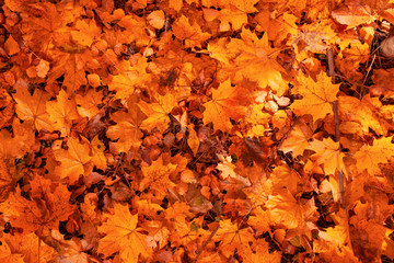 Leaves on the ground in autumn as a background