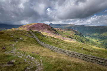 Mountain path and wall on Lingmoor Fell with blossoming heather