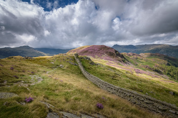 Path and wall crossing over the beautiful mountains covered by pink and purple heather