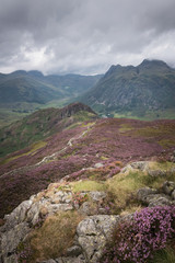 Path leading into the beautiful Great Langdale mountains with the purple heather blossoming