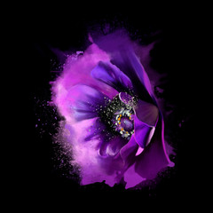 Beautiful anemone, close-up isolated on black background, with spray paint