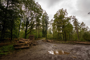 Dirt road with log from the logging in Begian forest