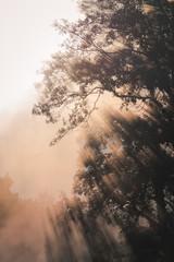 Crisp morning fog