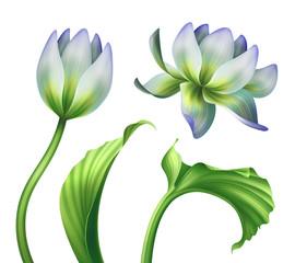 botanical illustration, beautiful lotus flowers, floral clip art, design elements set, isolated on white background