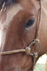 Close da cara de um cavalo crioulo