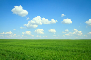 field with green grass and clouds on blue sky