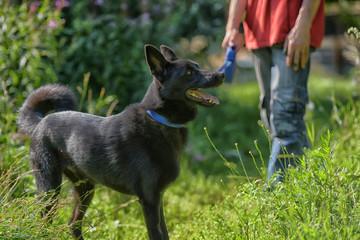 happy black dog g on grass background