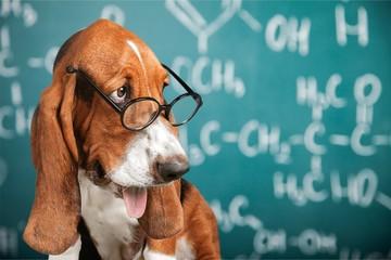 Math dog crazy glasses academic animal blackboard