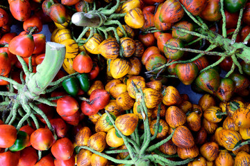 Fresh harvested colorful Peach palm fruit, or Chontaduro, in Cali, Colombia / South America.