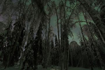 Moonlight night sky