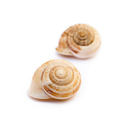 Exotic sea snail isolated on white background