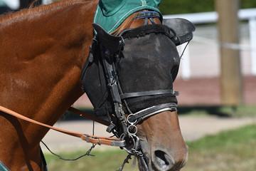 Foto op Plexiglas tête de cheval