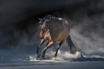 Photo sur Plexiglas Chevaux Stallion in motion in desert dust against dramatick background
