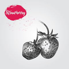 Hand drawn Strawberry sketch isolated on white background. Berries sketch elements vector illustration.