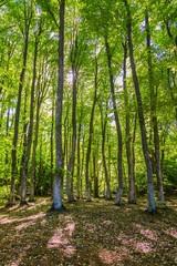 Obraz Forest - fototapety do salonu